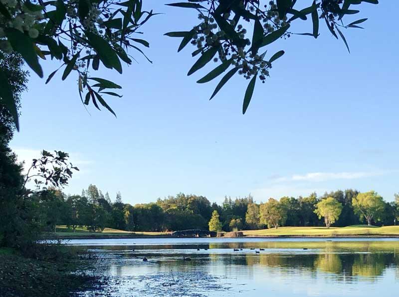Peregian Springs park